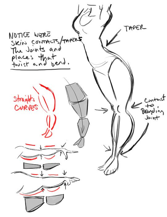 Character Design Animation Tutorial : The art of dave pimentel tapering body shapes ref