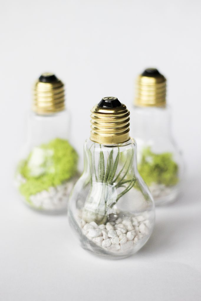 DIY Lightbulb Terrariums | CLAD&CLOTH