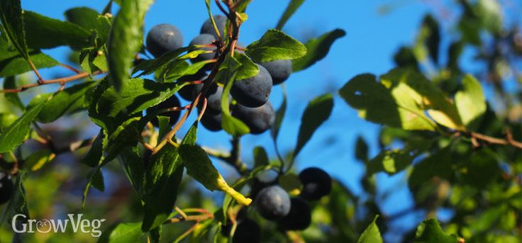 Creating an Edible Hedge for Foraging at Home