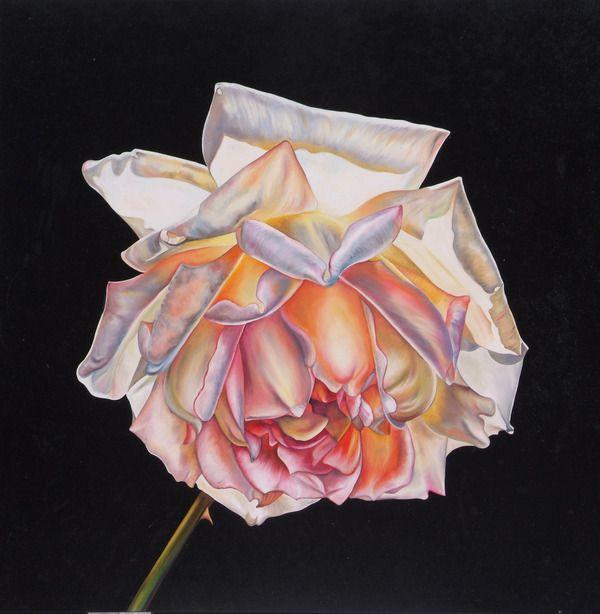 Peace Rose. www.natalietoplass.com