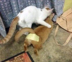 Cat birth control