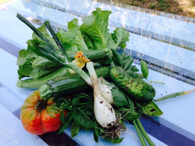 L'orto del B&B si sta dimostrando molto produttivo. Ecco qualcosa che abbiamo raccolto stamattina. I pomodori sono molto profumati.