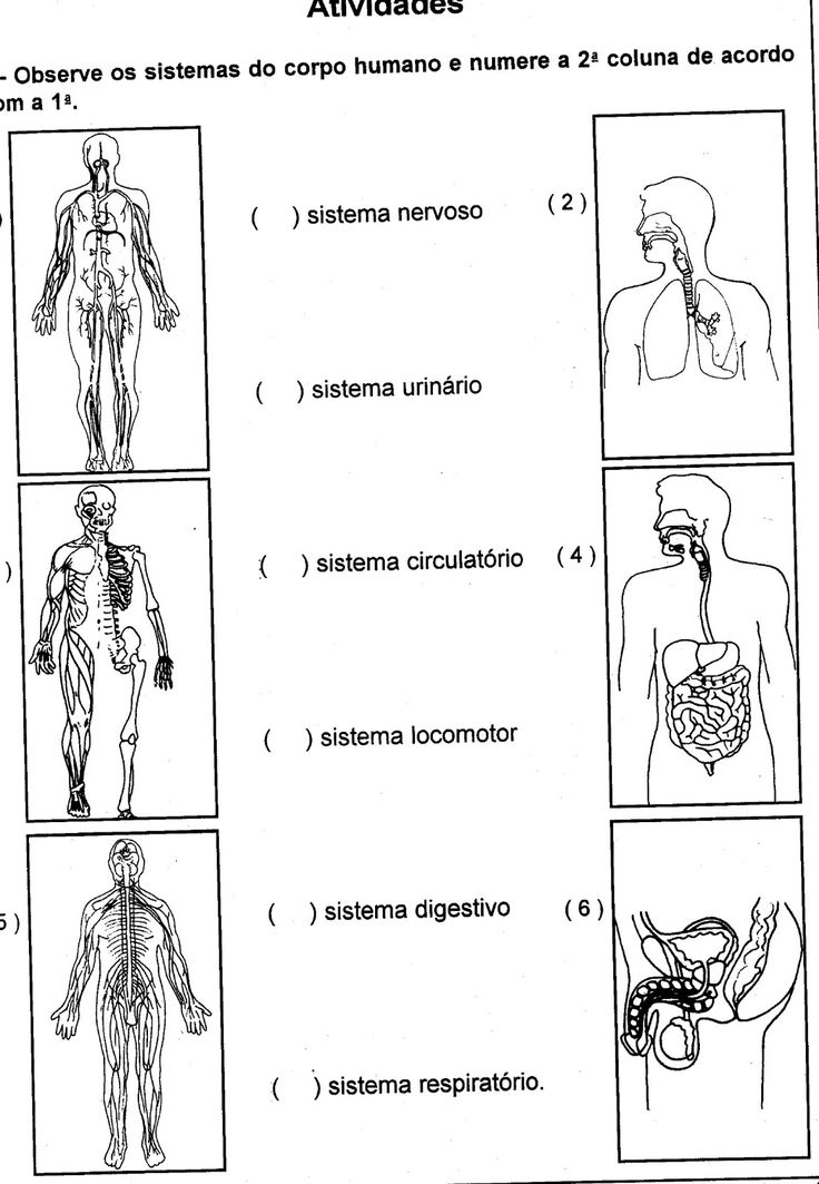 11 best Sistema locomotor images on Pinterest | The human body ...