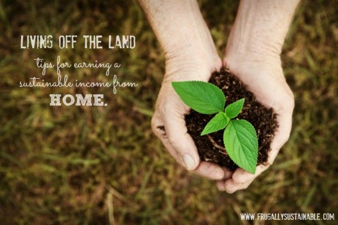 Living Off the Land: Tips for Earning a Sustainable Income from Home