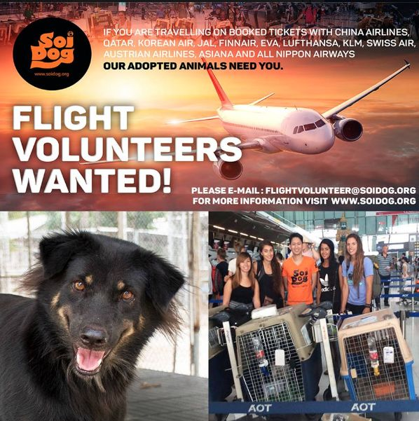 We have a number of rescued animals that have been adopted and are waiting to get to their forever homes. Can YOU help us get them there by being a FLIGHT VOLUNTEER?  We organize everything and there is NO COST to you. Previous flight volunteers have described it as the most rewarding experience of their lives!  If you are traveling FROM Thailand on BOOKED tickets with Thai Airways, Qatar, Korean Air, JAL, EVA, Lufthansa, KLM, ANA, Finnair or China Airlines please EMAIL…