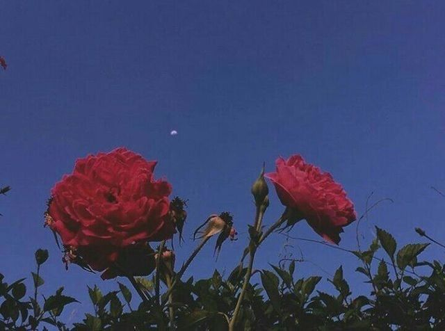 aesthetic sky grunge flowers vintage night