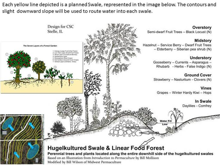 Rough draft of land layout for Permaculture Food Forest
