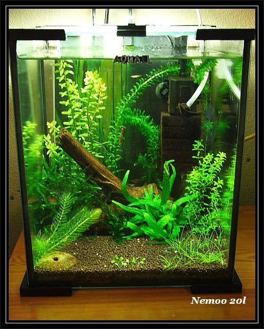 die besten 25 20l aquarium ideen auf pinterest planted aquarium nano aquarium und aquascaping. Black Bedroom Furniture Sets. Home Design Ideas
