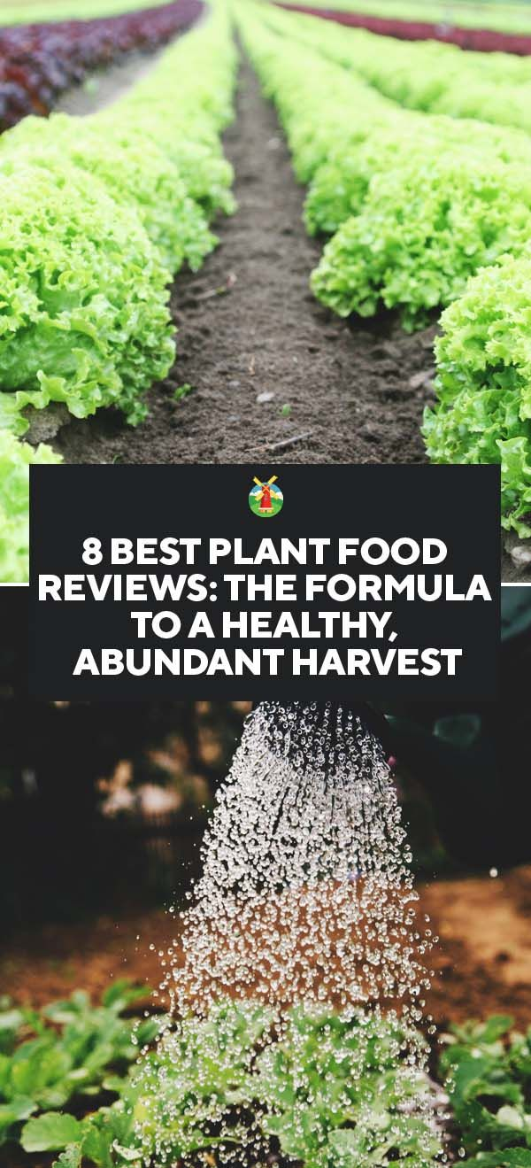 8 Best Plant Food Reviews The Formula To A Healthy Abundant
