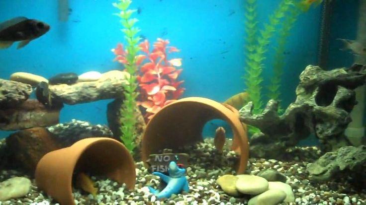 DIY Aquarium Decor?   My Aquarium Club