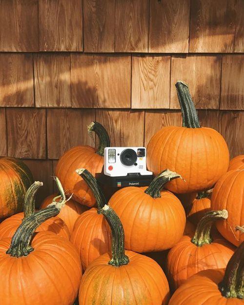 Its officially pumpkin everything season.  Were into it. via Polaroid on Instagram - #photographer #photography #photo #instapic #instagram #photofreak #photolover #nikon #canon #leica #hasselblad #polaroid #shutterbug #camera #dslr #visualarts #inspiration #artistic #creative #creativity