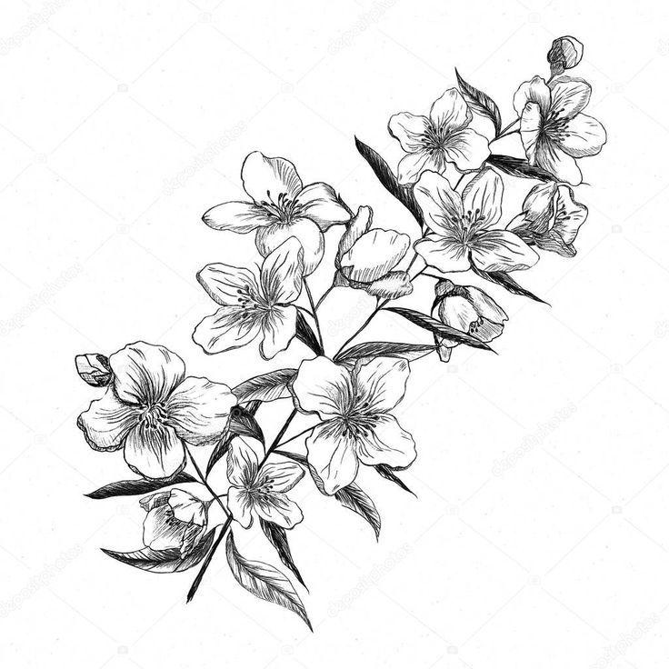 Jasmine Flower Drawing Google Search Jasmine Flower Tattoos