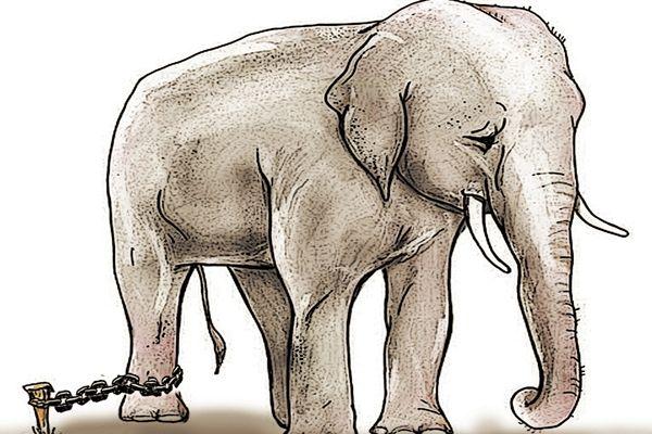 La parábola del elefante encadenado