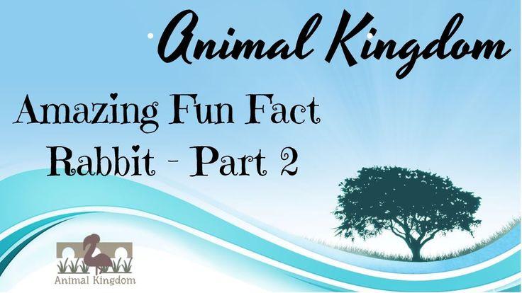 Animal Kingdom - Amazing Fun Fact about Rabbit – Part 2