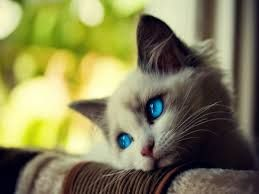 Cat Kitten Kitty - https://www.amazon.com/dp/B06ZZY3S13