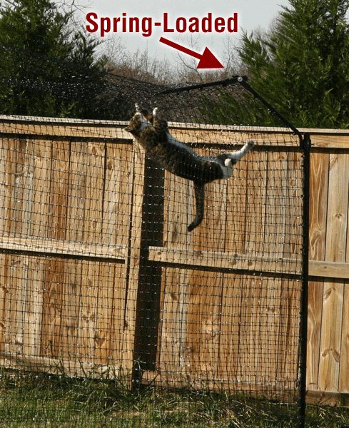 cat fence | Free-Standing Houdini-Proof Cat Containment System w/ Cat-Proofer ...