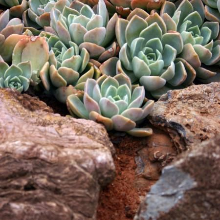 Garden Design South Africa 61 best south african indigenous garden images on pinterest