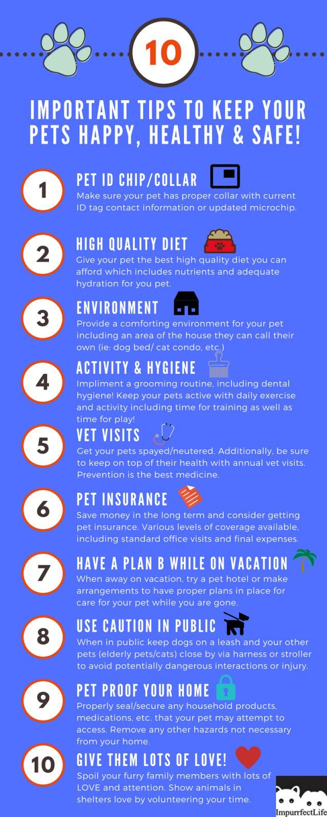 10 Important Tips To Keep Your Pets Happy Healthy And Safe