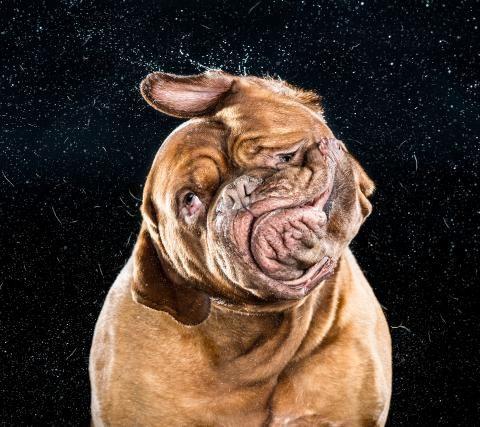 Hunde-Bilder: Zum Schütteln komisch - SPIEGEL ONLINE - Nachrichten - Panorama