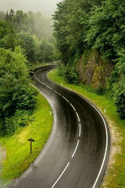 Curvy road, trees, curve, on the road again, beauty of Nature