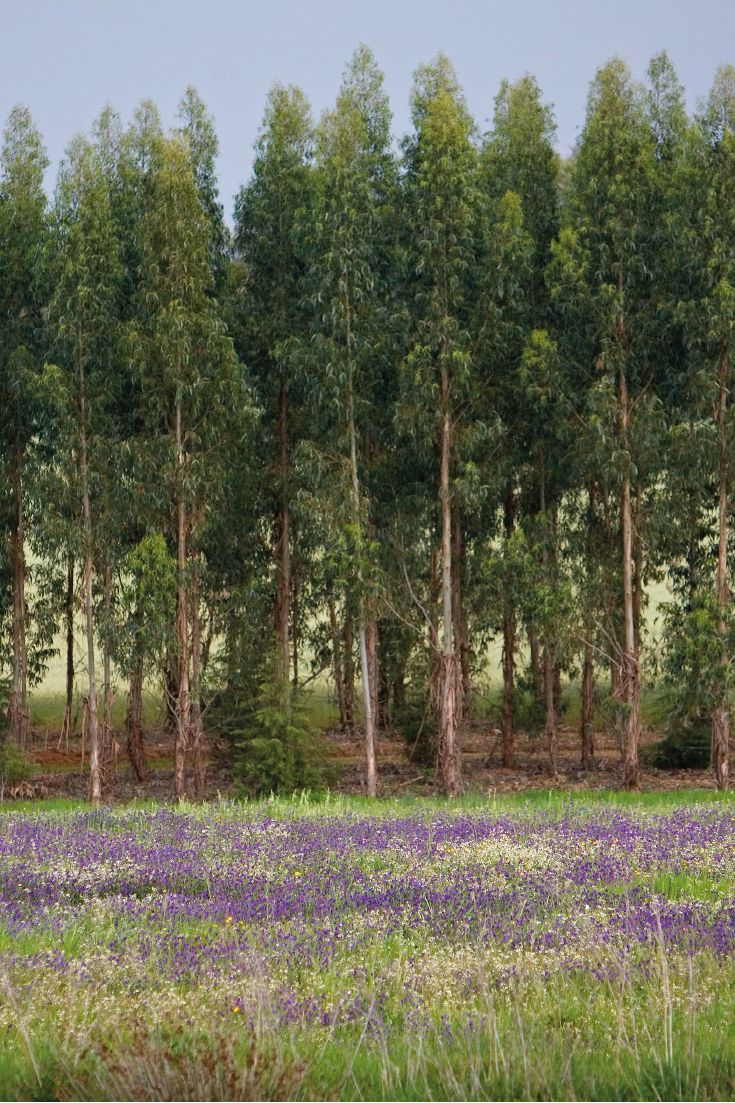 Inspiration for any impressionist painter out there.  #thenavigatorcompany #paper #forests #nature #spring