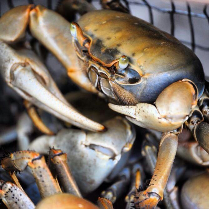 Crabs For Salmorejo De Jueyes Crab Stew Ingredients 12 ounces crabmeat ...
