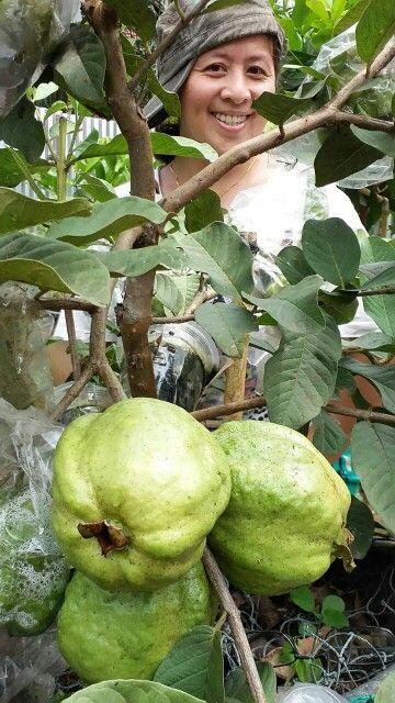 You Look So Good Guava