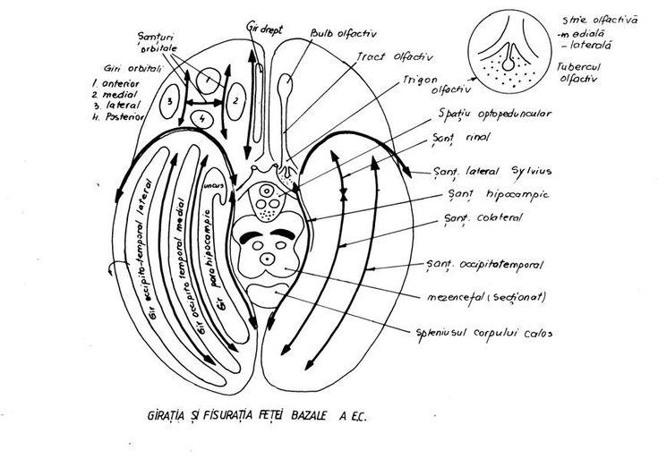 ochii de orbiți în varicoză