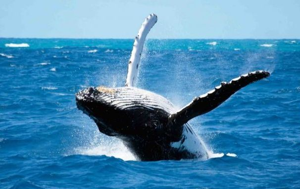Whales start to swagger in False Bay, come watch them at  #CapePoint,  #Capetown  #Southafrica. http://www.safari-cape-town.info/capepoint/