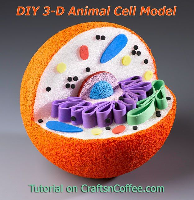 Awesome for science projects! How to DIY a 3-D Model of an ... White Blood Cells Diagram Labelled