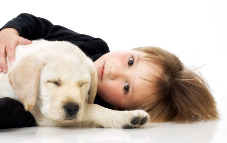 67 best fleas and parasites on your dog images on pinterest facts about dog adoption httponlyatdogworldvejournal6078 solutioingenieria Images