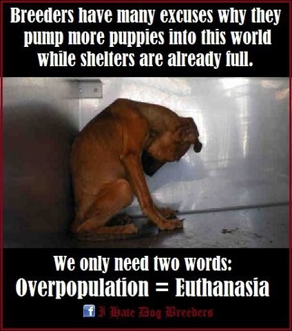 Dogs Are Euthanized Every Day Ad
