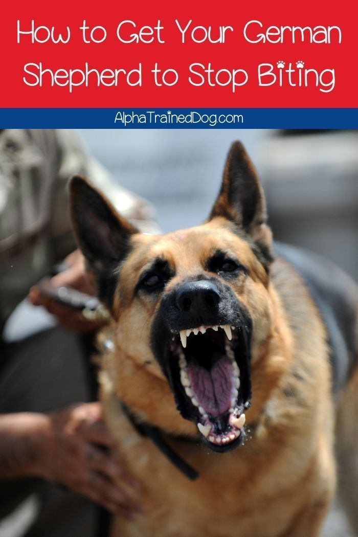 9bf0ab73830287cb46ee1e6befc9f4d0 - How To Get A Dog To Stop Aggressive Biting