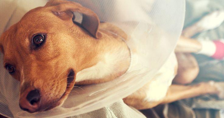 Elke hond verdiend een goede verzekering. Let wel even op de volgende aandachtspunten.