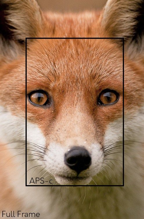 Which camera is best for wildlife photography? A full frame one or crop sensor APS-C type? It depends - let's have a closer look at why.