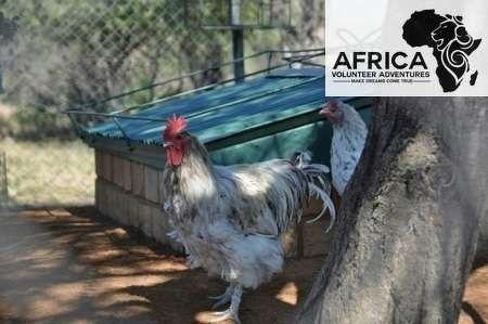 Buntle Ba Project - Design your Dream - Africa Volunteer Adventures www.africavolunteeradventures.com Make Dreams Come True