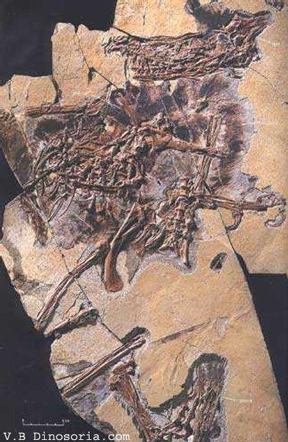 89 best Dinosauria 1 : Sinornithosaurus images on ...