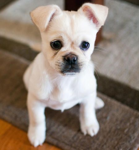 Best Rescue Puppies Ideas On Pinterest Puppy Shelters - Cute portraits baby and rescue dog