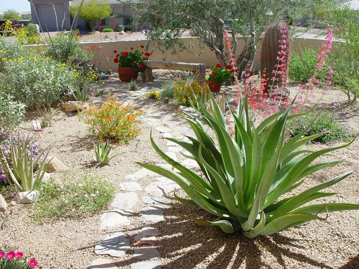 Oltre 1000 idee su zero scape su pinterest xeriscaping for Backyard landscaping plants