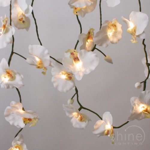 String Lights With Fabric : 8 best images about LUCY on Pinterest Reception desks, White orchids and Men s bathroom