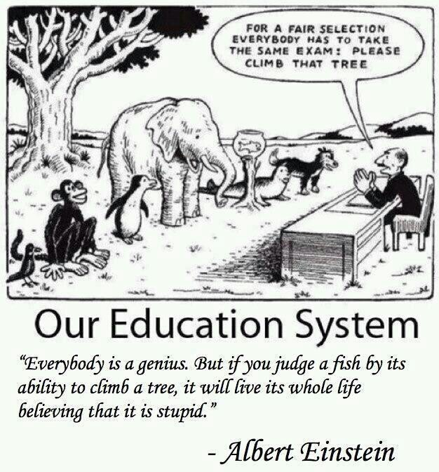 """If you judge a fish by its ability to climb a tree, it will live its whole life believing that it is stupid."" Albert Einstein"