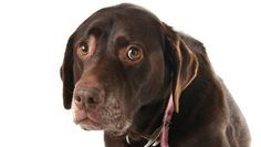 There are many ways you can drive your dog nuts � and you may not even be aware you're doing them.