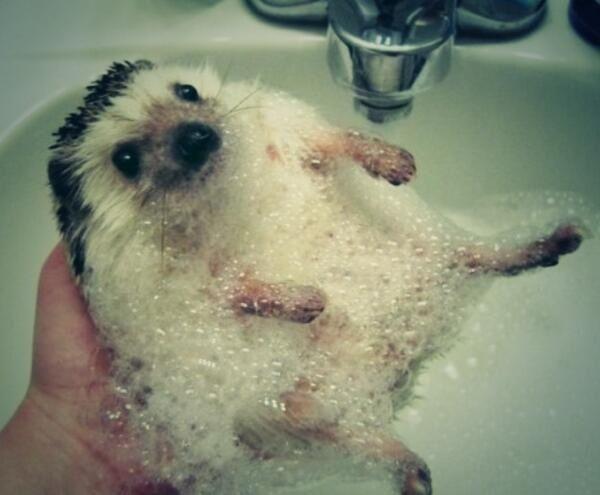 Hedgehog Bubble Bath | www.pixshark.com - 31.8KB