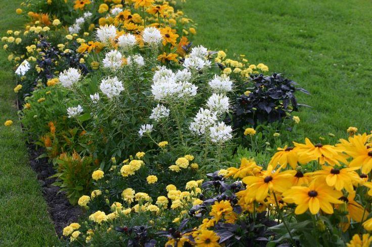 Egynyári virágbemutató a Margitszigeten | Magyar Tájépítészek Szövetsége