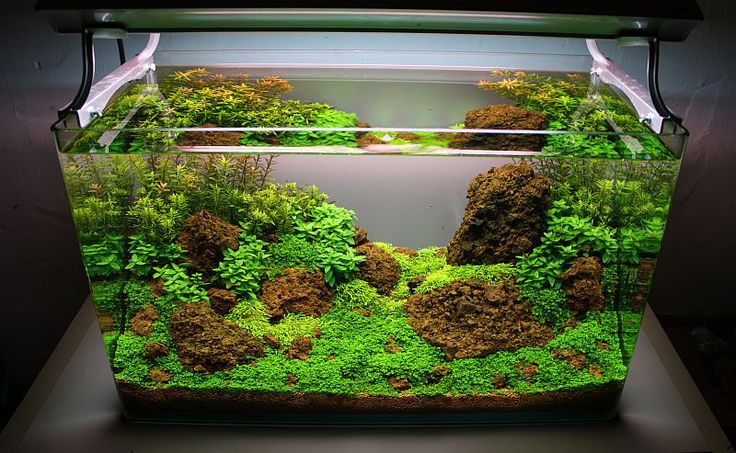 To do on next tank upgrade:  Aquascaping ahead of time