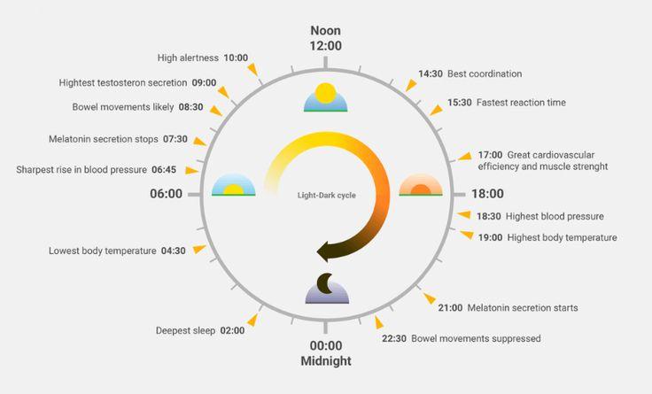 Circadian Rhythm – The Biological Clock Affecting Your Performance