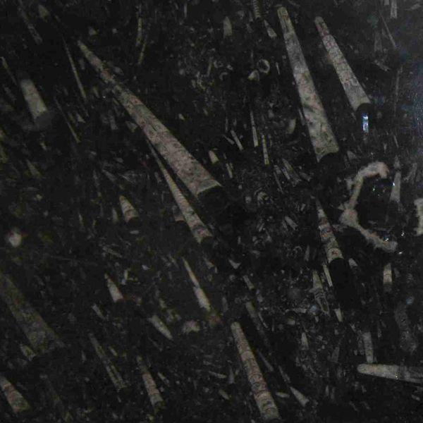 """Ένας """"πίνακας"""" μια """"πλακέτα"""" από Απολίθωμα Ορθοκέρας σε διάσταση 50X100cm Μοναδικής Ομορφιάς και σπανιότητας... μπορεί να διακοσμήσει τον χώρο σας, είτε σαν πίνακας ή και να μεταμορφωθεί σε ένα υπέροχο τραπεζάκι!"""