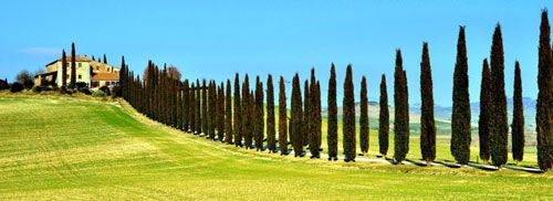 Tour por la Toscana italiana.