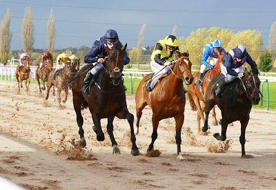 Racecourse Website Directory : Southwell Racecourse: Websites, Twitter Links & Fa...