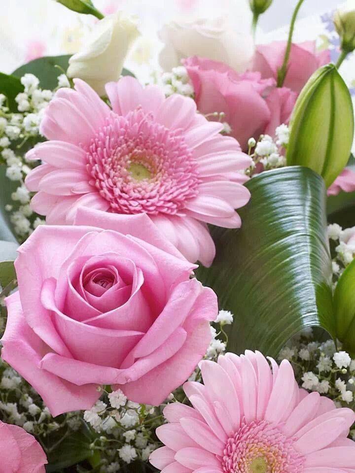 132 best images about les plus belles fleurs du monde on - Les plus belles portes du monde ...